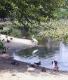 Gibbs Pond Park